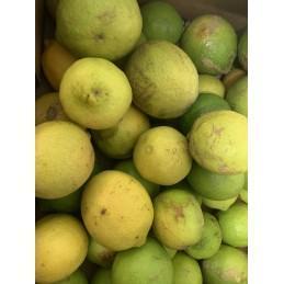 Citrons BIO 1 kg (Italie)
